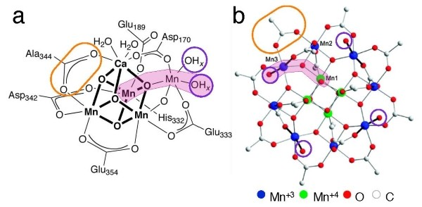 Fig. 2: Mn12Ac as a structural mimic of the OEC capable of reversible oxidation processes